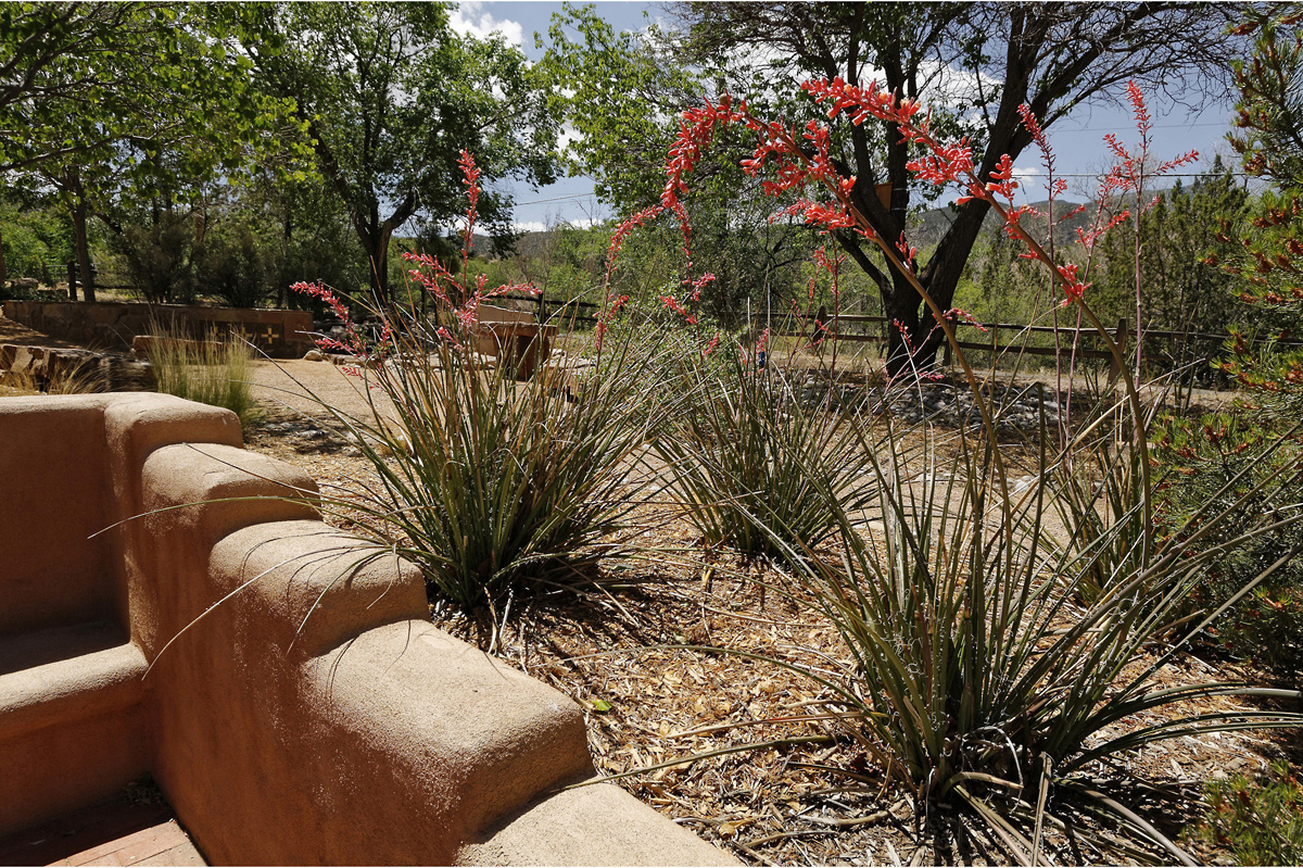 Garden #1 | Placitas Garden Tour