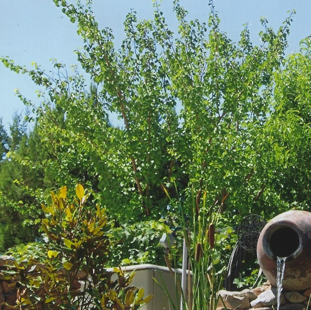 hoekenga-garden-01 640x636